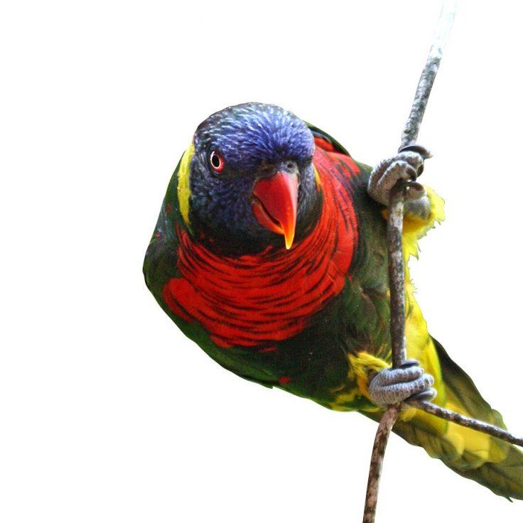 bird_zJ9u28Fdkl