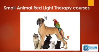 Webinar Small Animal Red Light Therapy Courses 2018
