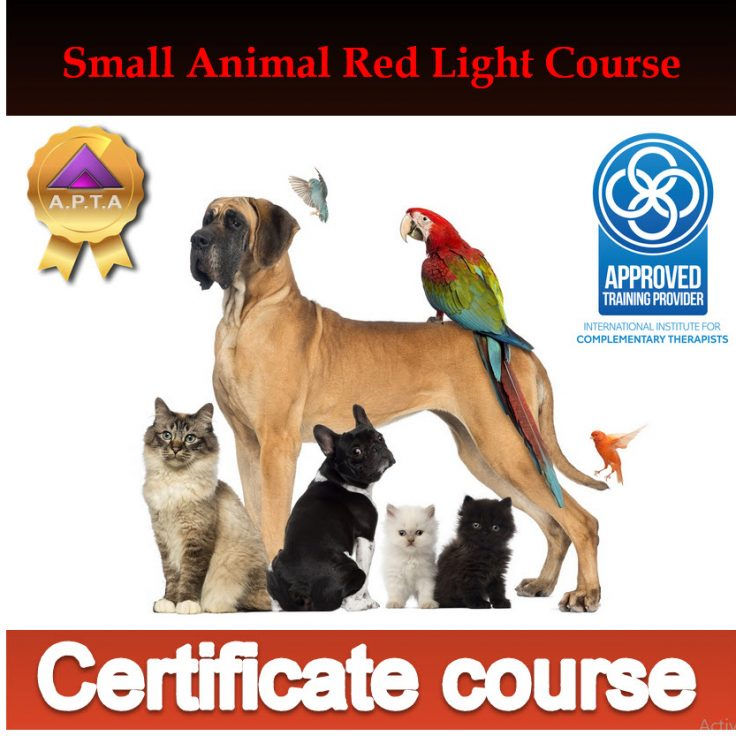 SmallA certificate course
