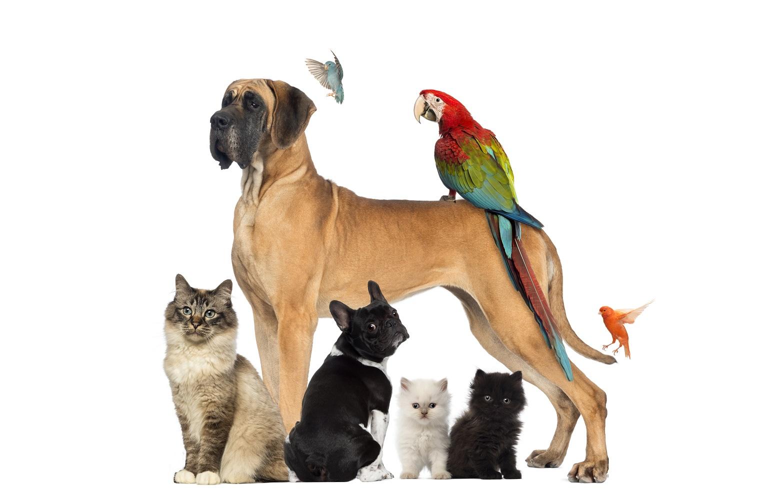 small animals togetherbisklein